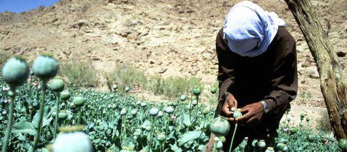 Egipt trece de la turism, la producţia de opiu