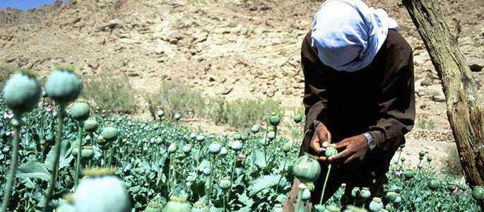 Ghizii turistici din Egipt s-au reorientat spre producția de opiu