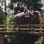 Sri Lanka. La o plimbare cu… elefanții