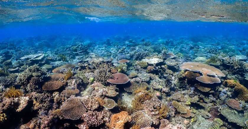 Recif uriaș descoperit în nordul coastelor Australiei