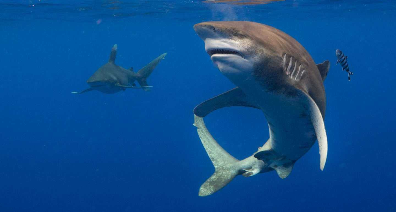 Atac al rechinilor în stațiunea Sharm El-Sheikh – Egipt